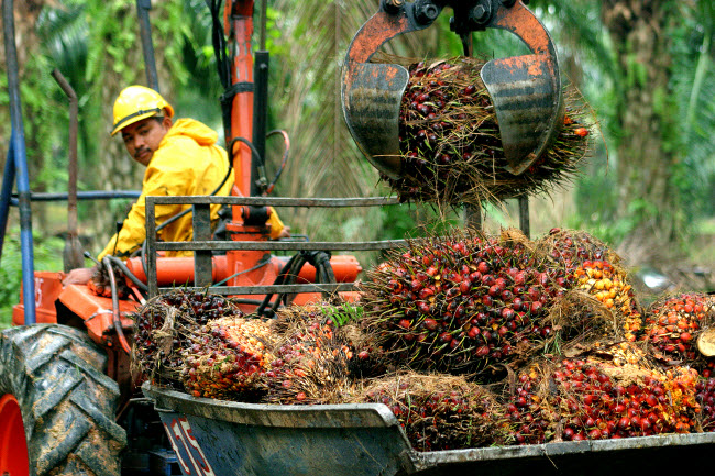 Mechanising the Collection of Oil Palm Fresh Fruit Bunch (FFB)